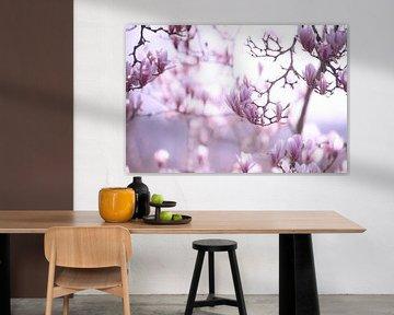 Zarter Frühling Magnolien Blüte von Tanja Riedel