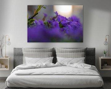 violette Bodenbedeckung von Tania Perneel