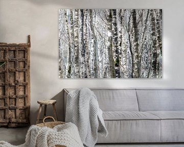 Berkenbos behang van Gerard van Roekel