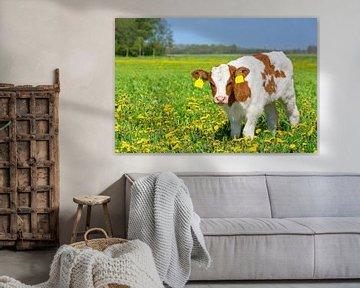 Een rood Holstein kalf in een Europese wei met bloeiende gele paardebloemen von Ben Schonewille