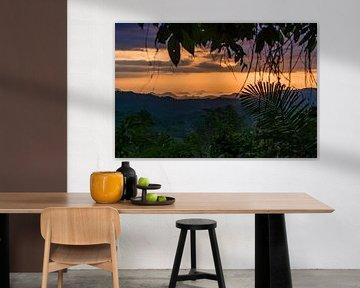 Dschungel-Fenster von Jonathan Krijgsman
