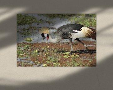 rare haar vogel van Laurence Van Hoeck
