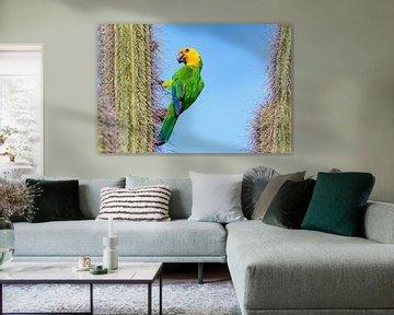 Yellow Wing Amazonas-Sittich hängt an einem Kaktus mit blauem Himmel als Hintergrund von Ben Schonewille