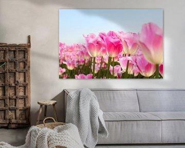 Frühling in Farbe   Tulpenfeld von Nathalie Villier