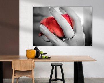 Rose in leuchtendem Rot in einer schwarz-weißen Hand von Atelier Liesjes