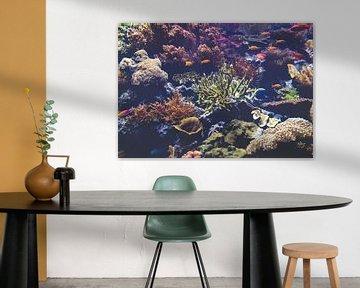 Onderwaterwereld van Michelle LaSanto