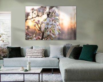 Frozen blossom van Max ter Burg Fotografie