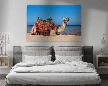 Dieses farbenfrohe Kamel liegt am Strand am Meer in Hurghada, Ägypten. von Ben Schonewille