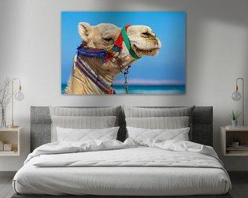 Porträt mit Kamelkopf mit blauem Himmel auf dem Hintergrund von Ben Schonewille