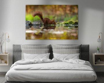 Eichhörnchen von Patrick Reymer