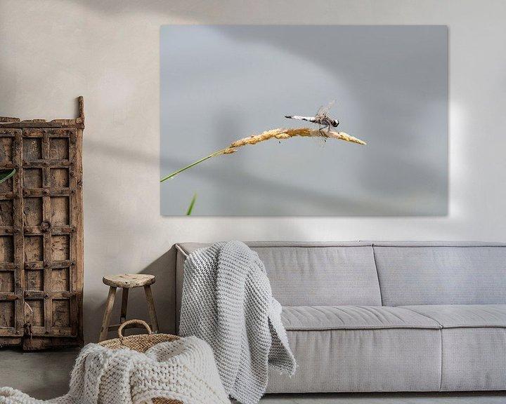 Sfeerimpressie: Libelle op graanhalm van Bram de Muijnck