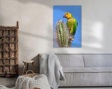 Deze geelvleugelamazone papegaai zit boven op een cactus en eet een bloemknop van Ben Schonewille