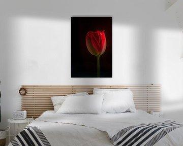Stilleven van een rode tulp van Ellen de Ridder