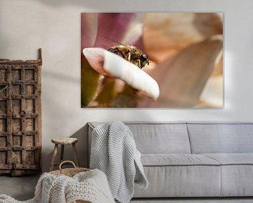 Insekt auf Blatt von Rob Rijfkogel
