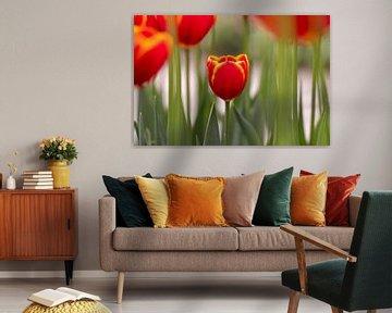Tulpen von Yvon NL