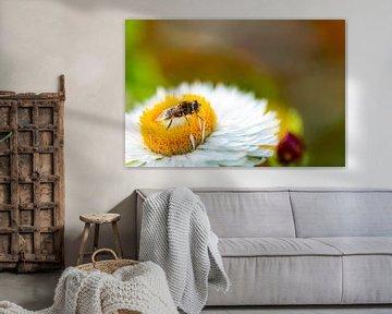 Blume mit Schwebfliege.