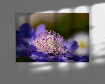 Blühende Blume. von Anneke Hooijer