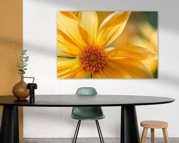 Gelbe Blume von Anneke Hooijer
