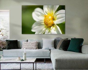 Gelb-weiße Blume
