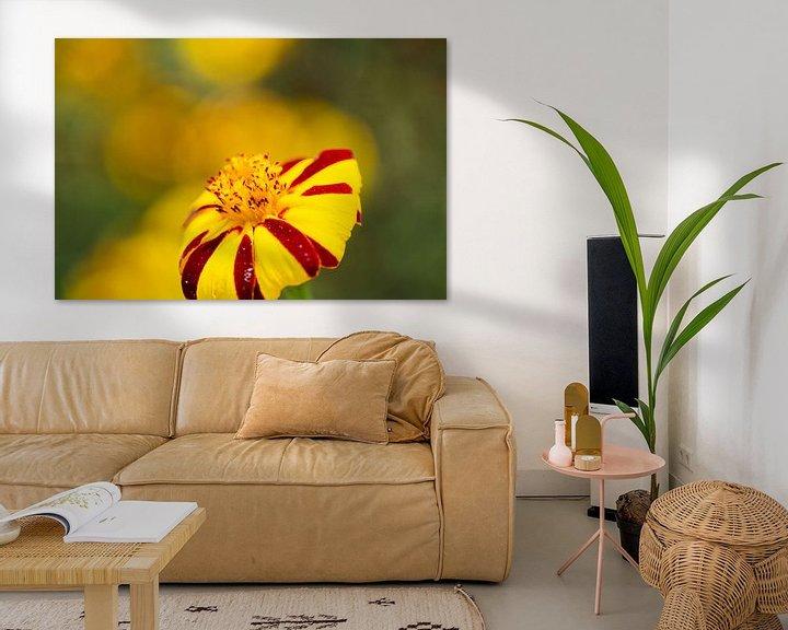 Sfeerimpressie: Rood gele bloem van Anneke Hooijer