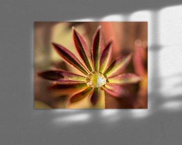 Lupineblad van Jeroen Mikkers
