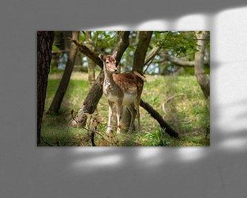 Junge Hirsche von Joke Beers-Blom