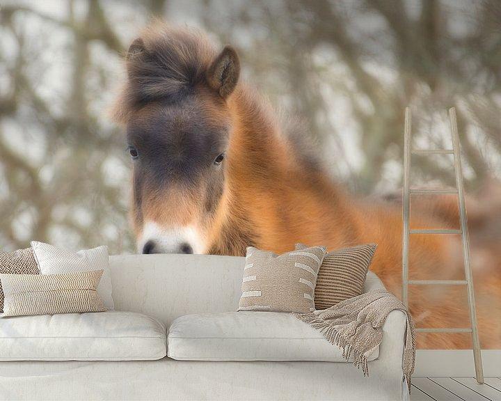 Beispiel fototapete: Ein süßes braunes Fohlen von Wendy Tellier - Vastenhouw