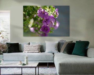 Violette Blumen von Joke Beers-Blom