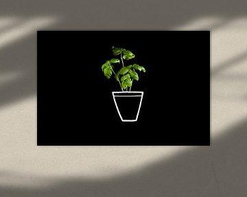 Basilicium in pot, green basil. van Corrine Ponsen