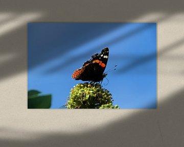 vlinder in de lucht van wil spijker