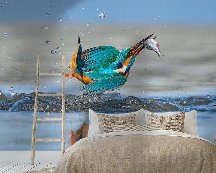 Impression: Martin-pêcheur - Acrobat sur IJsvogels.nl - Corné van Oosterhout