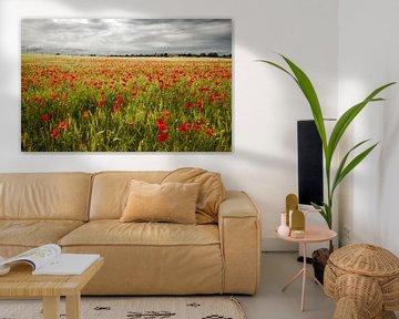 Il campo di fiori von Frank Quax