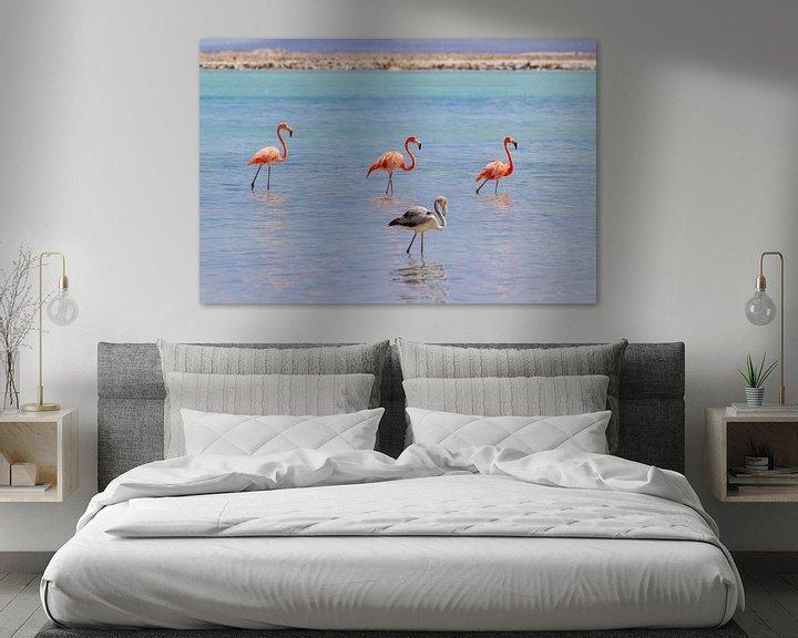 Beispiel: Gruppe roter karibischer Flamingos im Wasser vor der Küste von Bonaire von Ben Schonewille