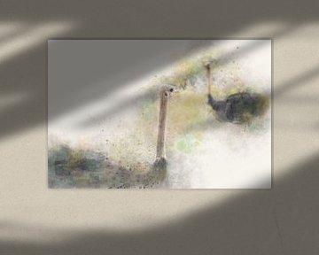 Nieuwsgierige struisvogels - Photography & Art van - GreenGraffy -