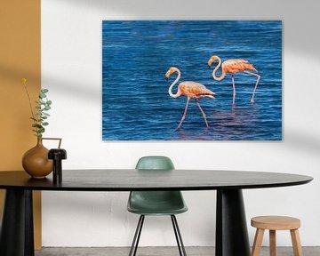 Zwei rote karibische Flamingos laufen an der Küste von Bonaire im Wasser herum von Ben Schonewille