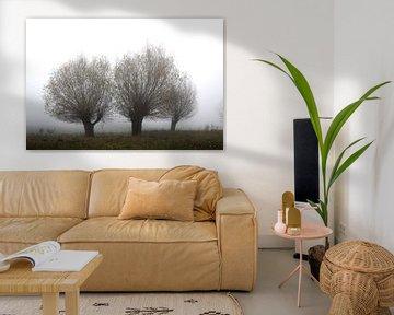 Wilgenbomen in de mist van Karina Baumgart