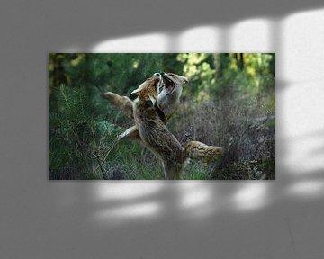 Kämpfende Füchse von Pieter Roos