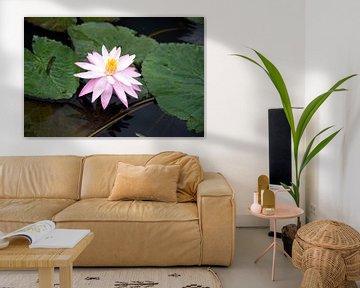 Lotus von Bram de Muijnck