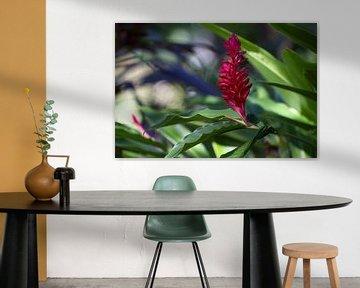 Mexicaanse rode bloem van Renald Bourque