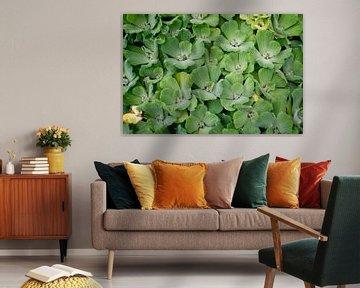 Pflanzen Wanddekoration von Maureen Materman