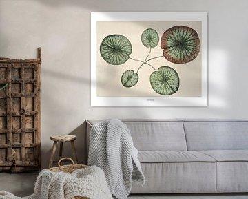 Seerose II von Bright Designs