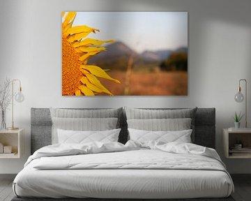 Sonnenblume von Arno Rakers
