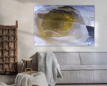 Gele en witte roos in ijs 3 van Marc Heiligenstein