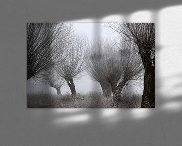 knotwilgen in vorst en mist van Karina Baumgart