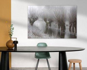des saules têtards dans le gel et le brouillard sur Karina Baumgart