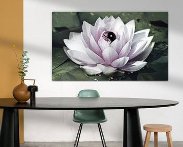 Fleur de lotus Yin Yang