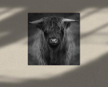 Highlander – Black& White Edition van Marja van den Hurk