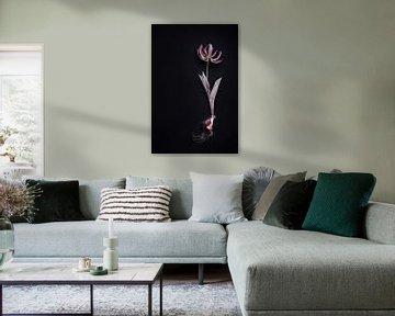 getrocknete Tulpe mit Zwiebel von Karel Ham