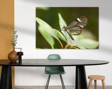Glasflügel-Schmetterling von gea strucks