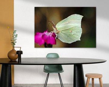 Schmetterling auf Blume von wil spijker